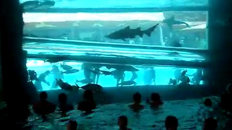 akvárium datování tradiční randění je mrtvé