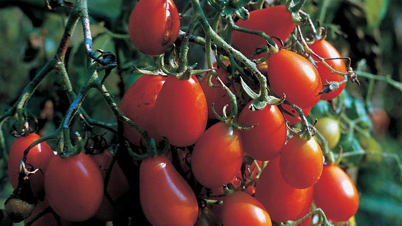 Češi si vypěstují tisíce tun ovoce a zeleniny