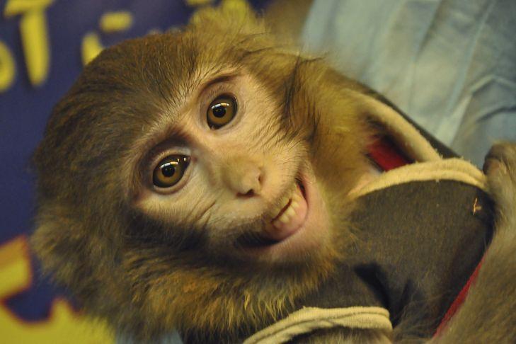 Opice, která podle Íránu úspěšně přistála po letu do vesmíru.