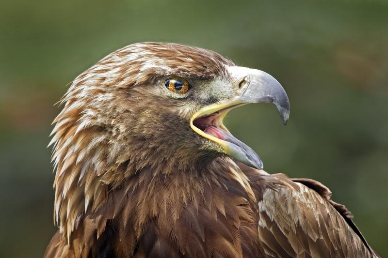 Fena s velkým ptákem