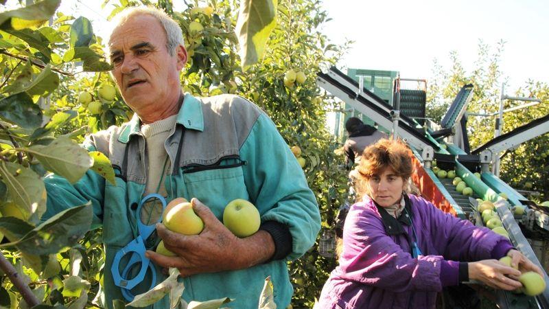 Sklizeň ovoce kvůli mrazům klesla o víc než čtvrtinu