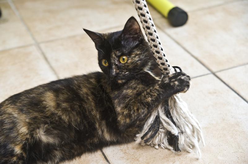 Černá kočička domů