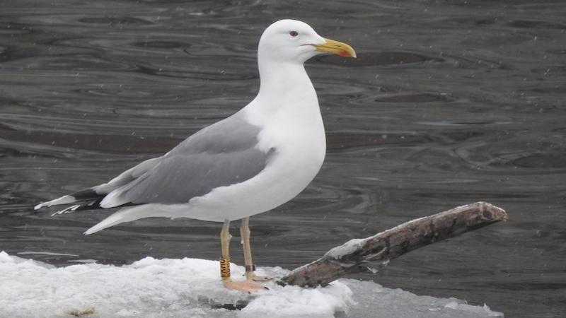 Opravdu velké bílé ptáky