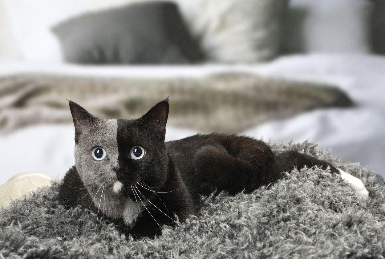 černá kočička malé kozy