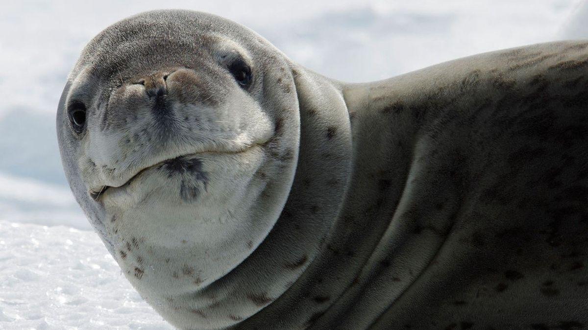 Mladíka na australské pláži vylekala největší šelma Antarktidy
