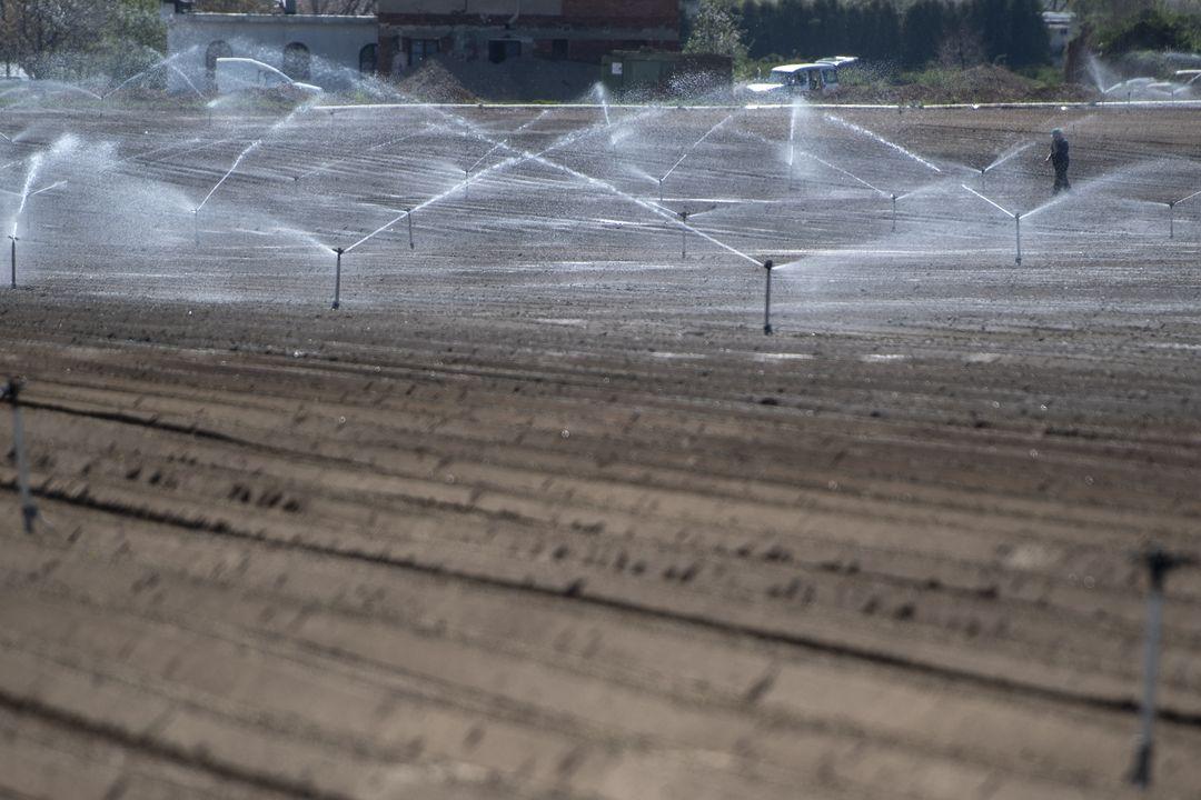 Pěstování zeleniny se letos neobejde kvůli velkému suchu bez zavlažování a závlahových systémů. Na snímku pole u Hradce Králové.