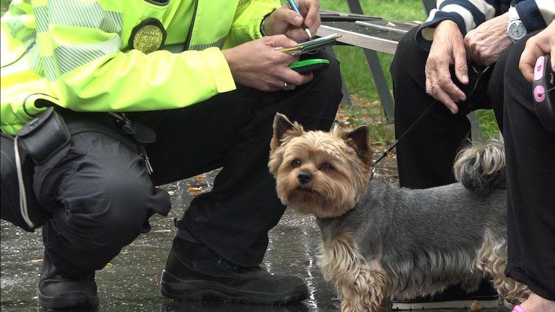 Povinný čip nepomůže najít ztraceného psa, chybí státní registr