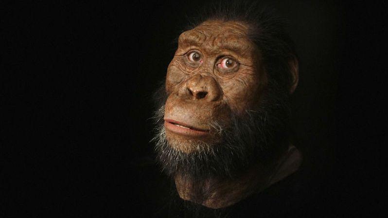 Vědci objevili 3,8 milionu let starou lebku. Podle ní zrekonstruovali obličej předchůdce člověka