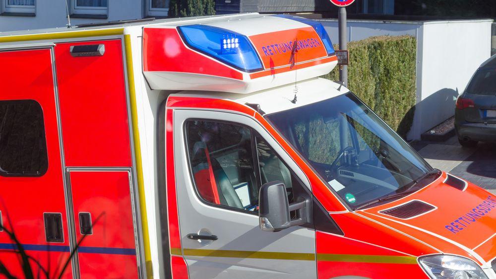 V Německu napadl labrador šestiletého chlapce