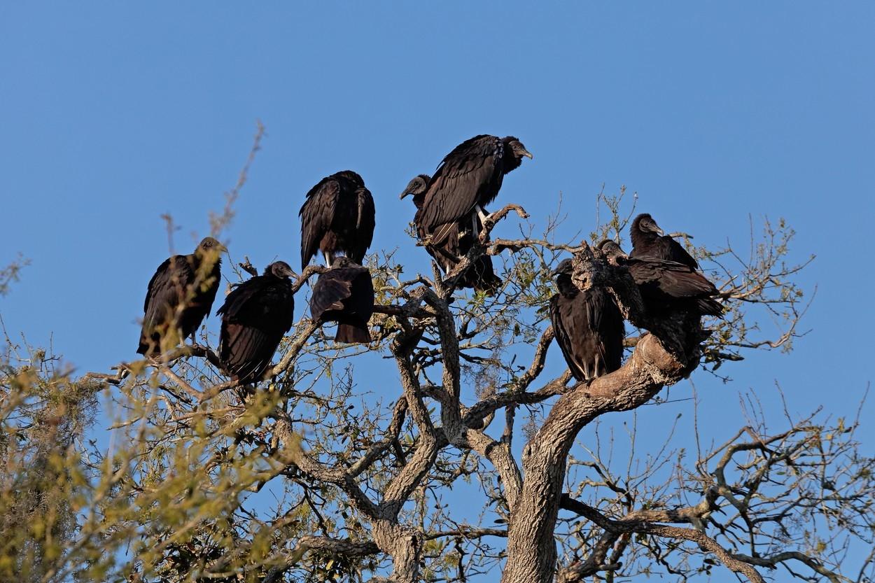 Obrázky velkých ptáků v kundě