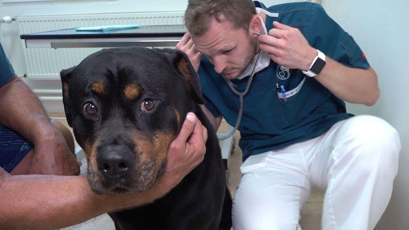 Psi zachraňují psy darováním krve