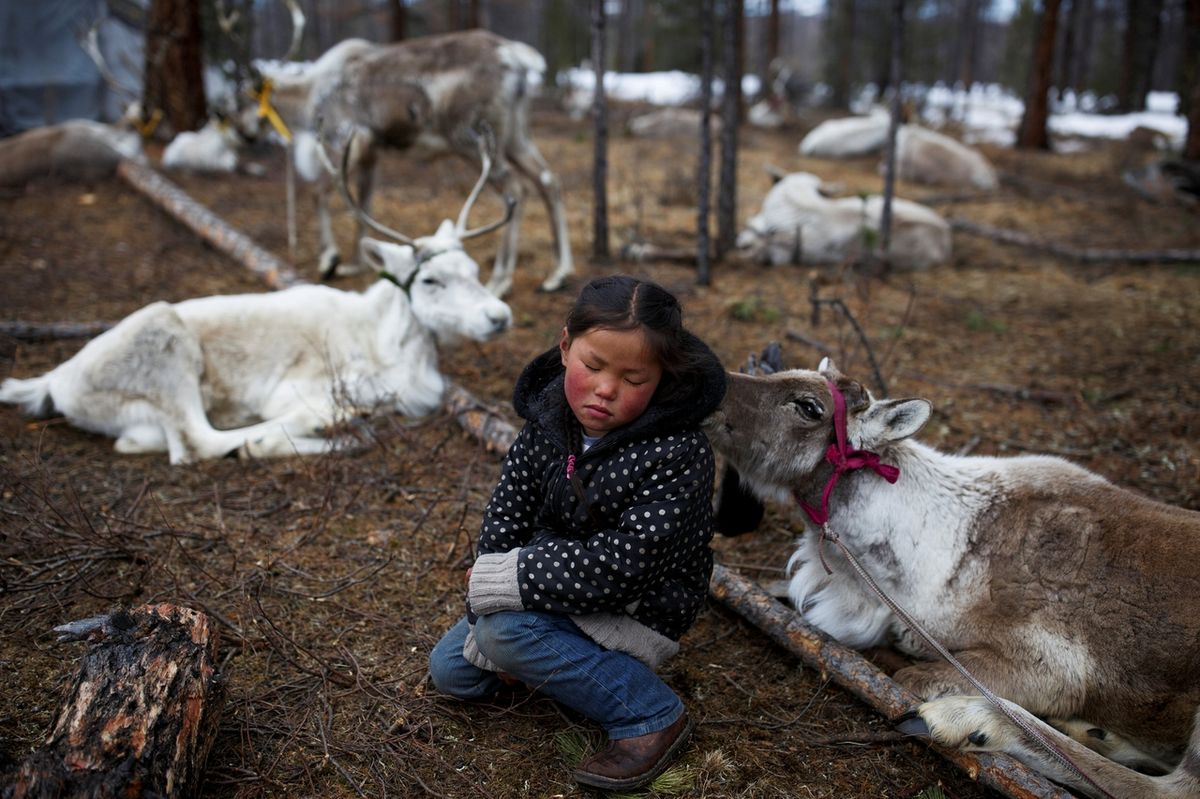 Pictures of the YearTsetse, six-year-old daughter of Dukha herder Erdenebat Chuluu, sits among her family's reindeer in a forest near the village of Tsagaannuur, Khovsgol aimag, Mongolia, April 21, 2018. REUTERS/Thomas Peter
