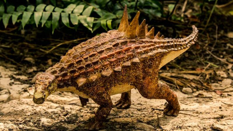 fosilních fosilních dinosaurů dobré otázky, zeptejte se dívky online datování