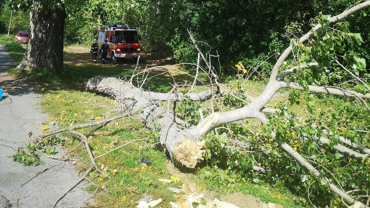 V Nitře spadl na školáky za větru strom, 14letého chlapce zabil