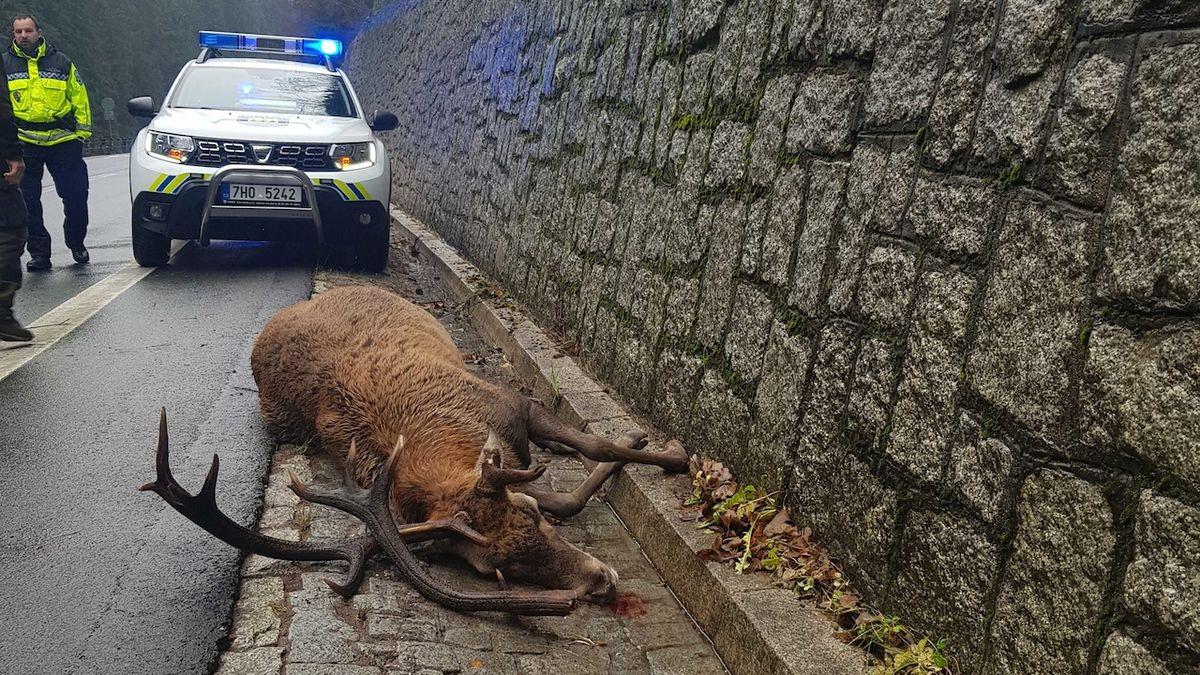 Pes uštval v Krkonoších jelena, tvrdí ochranáři
