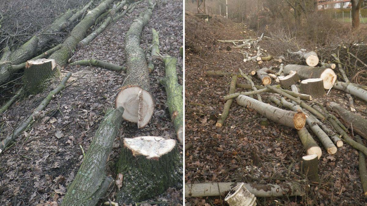 SŽDC dostala pokutu za nelegální kácení stromů u trati