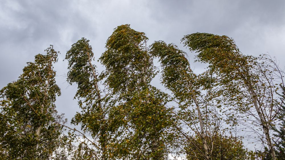 Na východě hrozí silný vítr, v Krkonoších náledí