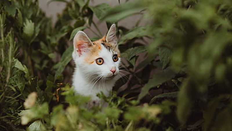 Obrázky dívek kočičky