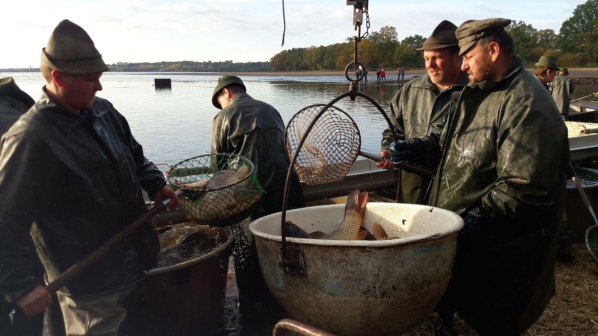 Třeboňští rybáři začali s výlovem Rožmberka. Vyhlížejí i sumce Standu