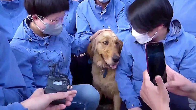 O psa se během karantény v Číně starali zdravotníci, zvíře pak nechtělo k majiteli