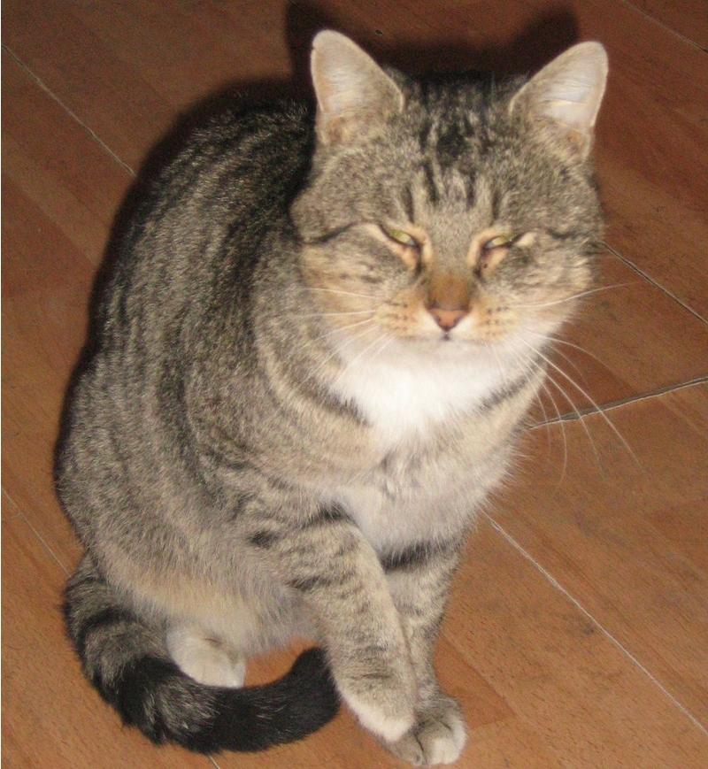 Velká kočička obrázek com