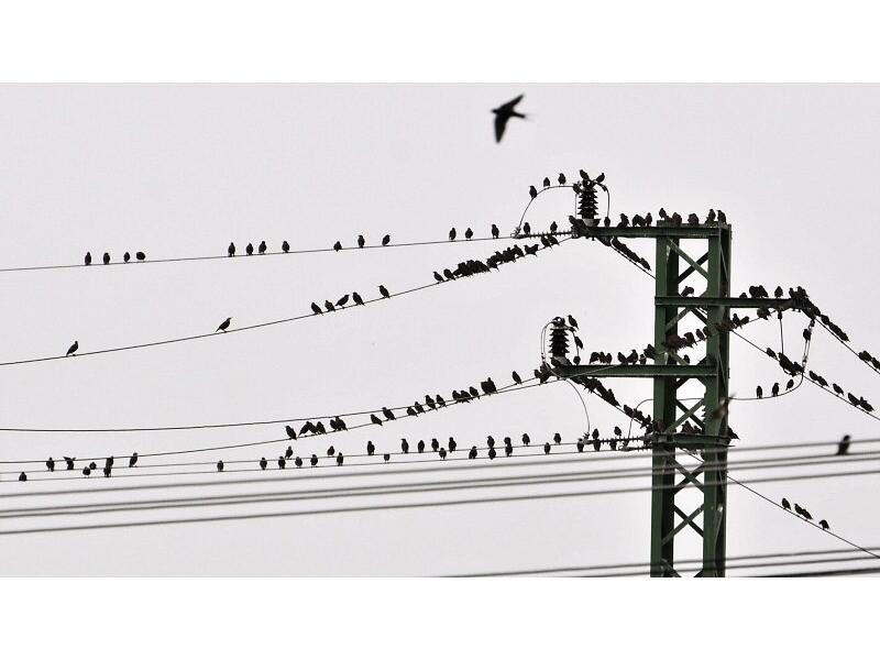 prsa a velké ptáky