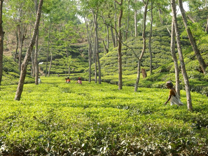 randění v Bangladéši seznamky webové stránky stojí peníze
