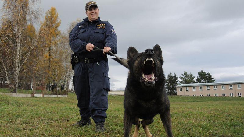Řidič ve Staříči utekl od nehody, v trávě ho našel policejní pes
