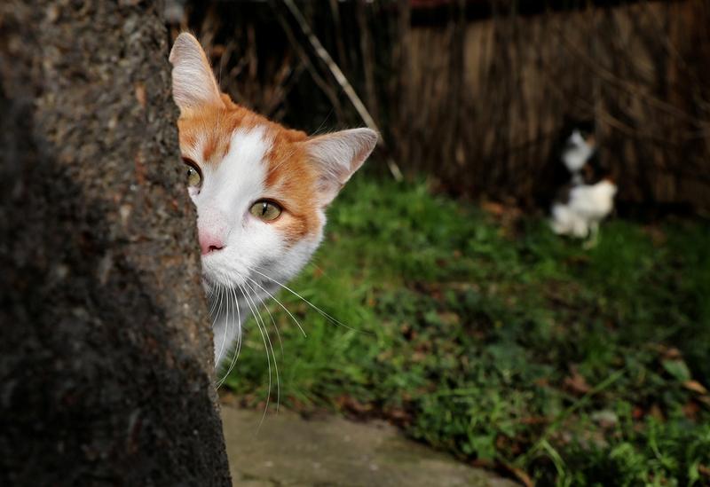 Obrázky nahé dámské kočičky