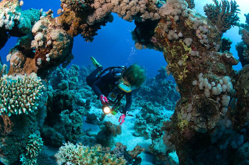 Připojte mys korálů