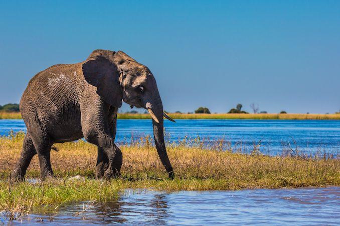 Lidé, kteří chtějí spatřit čarokrásné Okavango, se sem vydávají z celého světa.