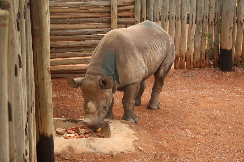 Seznamka pro jednotlivce v Keni