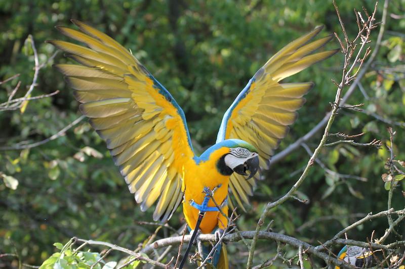 velké ptáky ve velkých zadcích