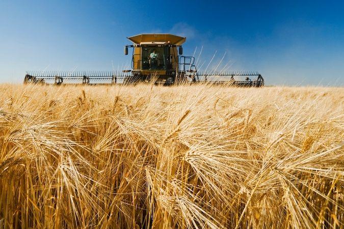 Ječmen se využívá hlavně jako krmivo pro hospodářská zvířata a také pro výrobu piva a whisky.