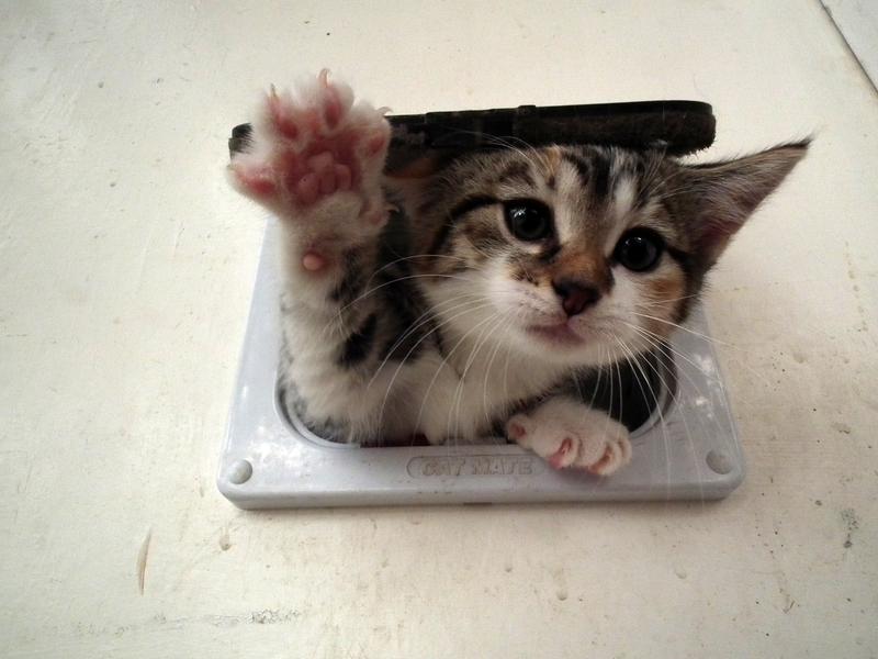 Malé těsné kočička fotky