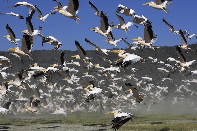 Obrázek mužů ptáků