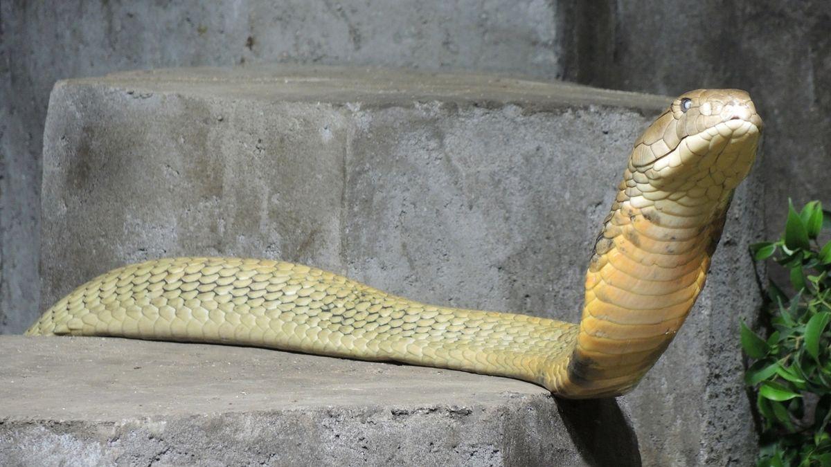 Dojič hadů či testovač tělových deodorantů. Některá povolání mohou být opravdu bizarní
