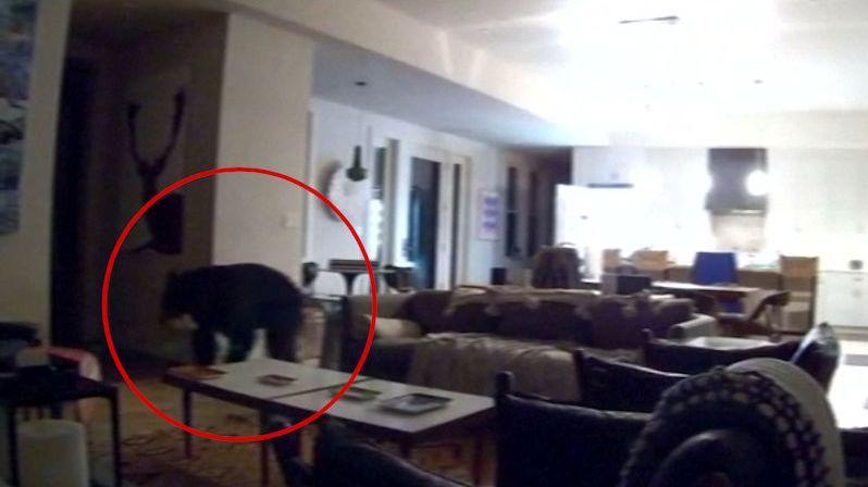 Mladíky překvapil v domě medvěd, načapali ho u lednice