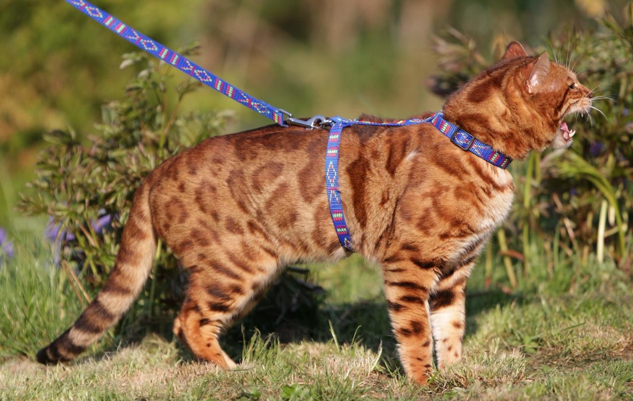 Dospívající věk kočička
