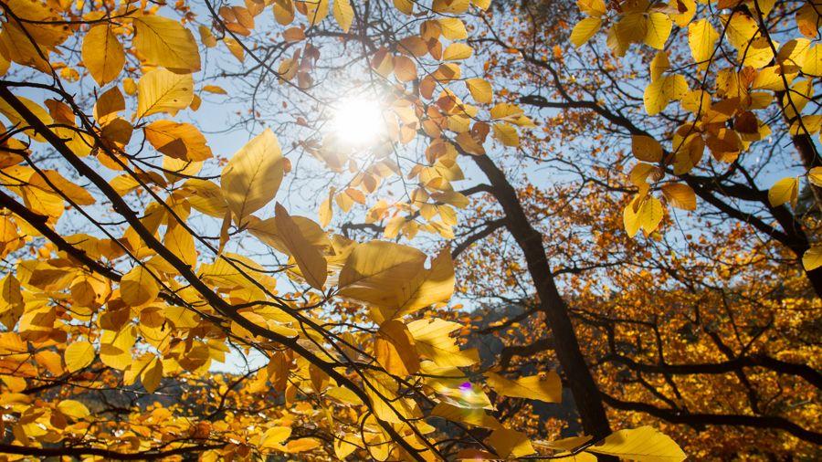 Ve 21:21 vstoupí Slunce do Vah. Začíná podzimní rovnodennost