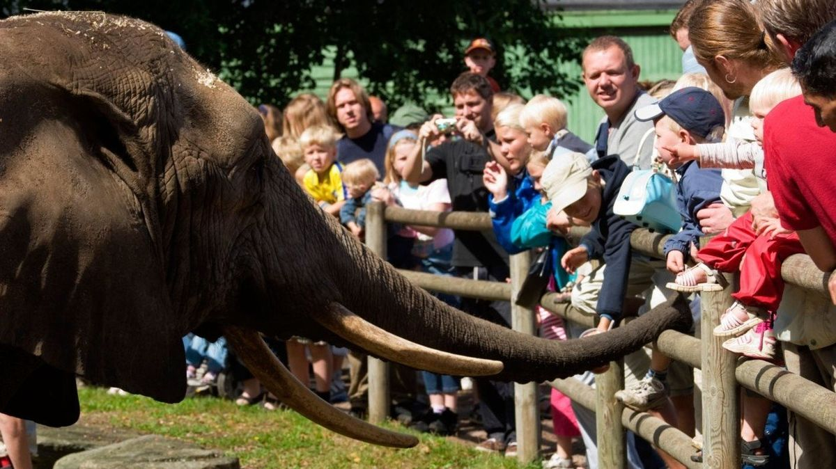 Kam o víkendu s dětmi: Oslavte den slonů, vydejte se na historickou bitvu