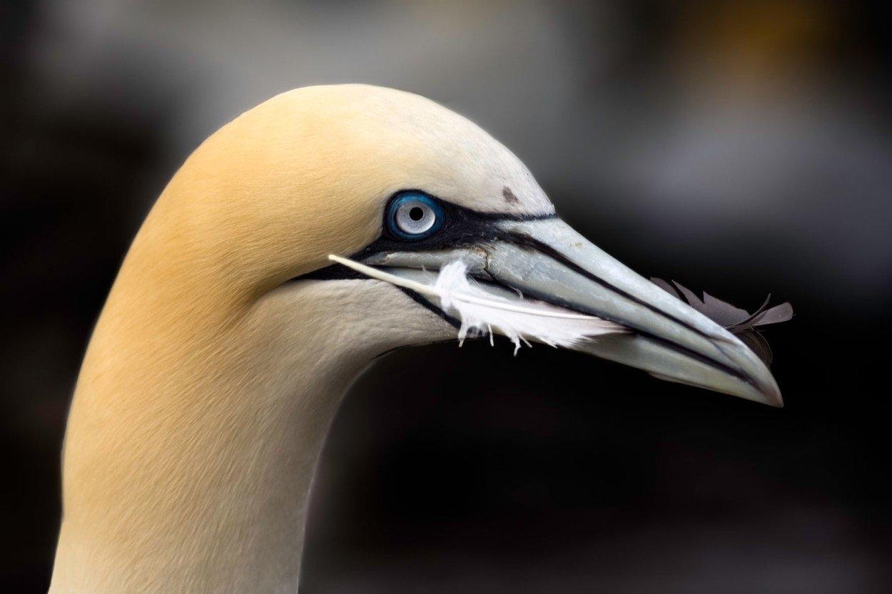 pták obrázek