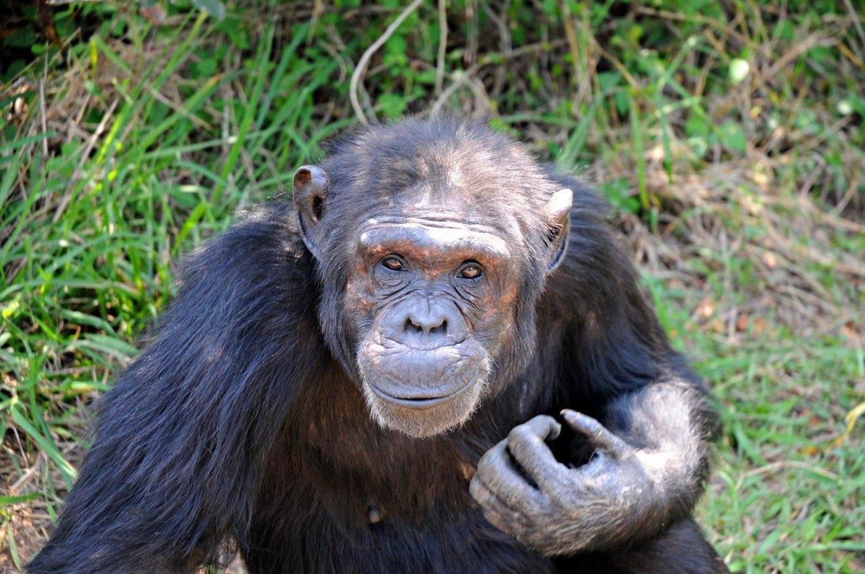 opice chodit organizátor un speed dating