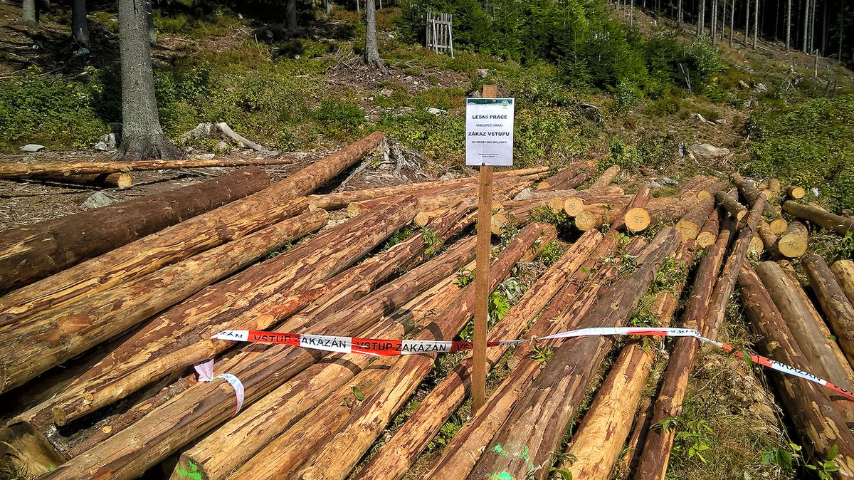 Muže na Bruntálsku zavalil strom, na místě zemřel