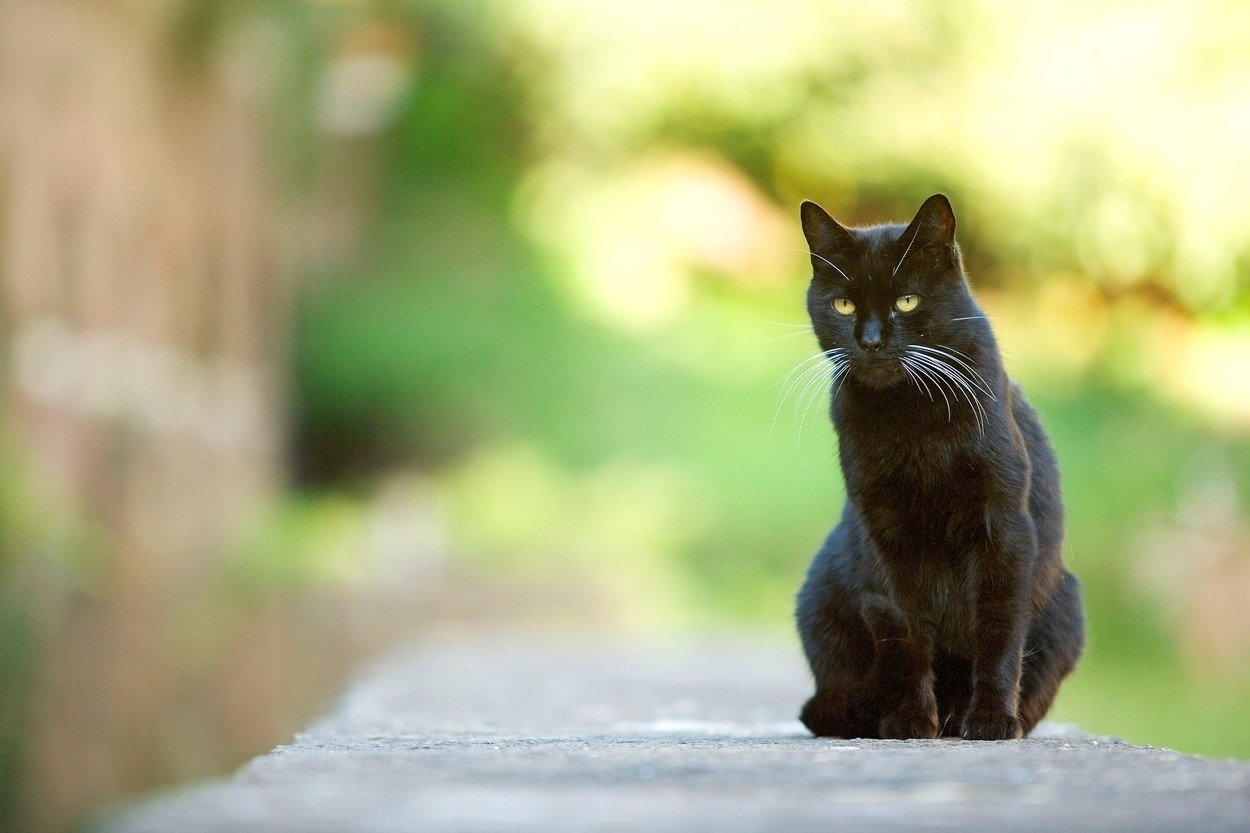zdarma černá kočička galerie