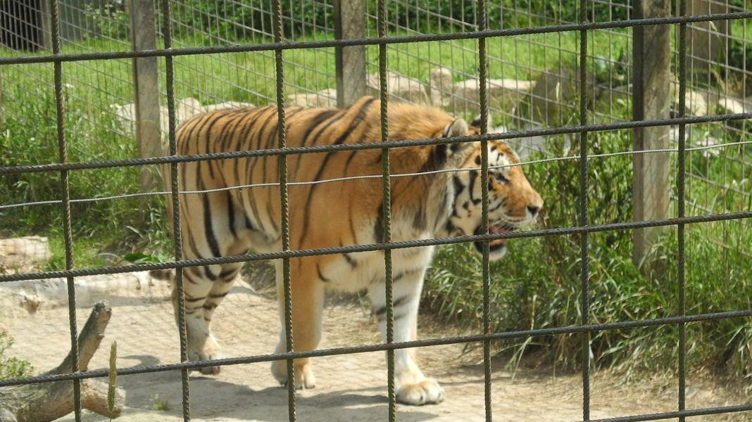 Stát chce zřídit šelminec na dožití zabavených zvířat