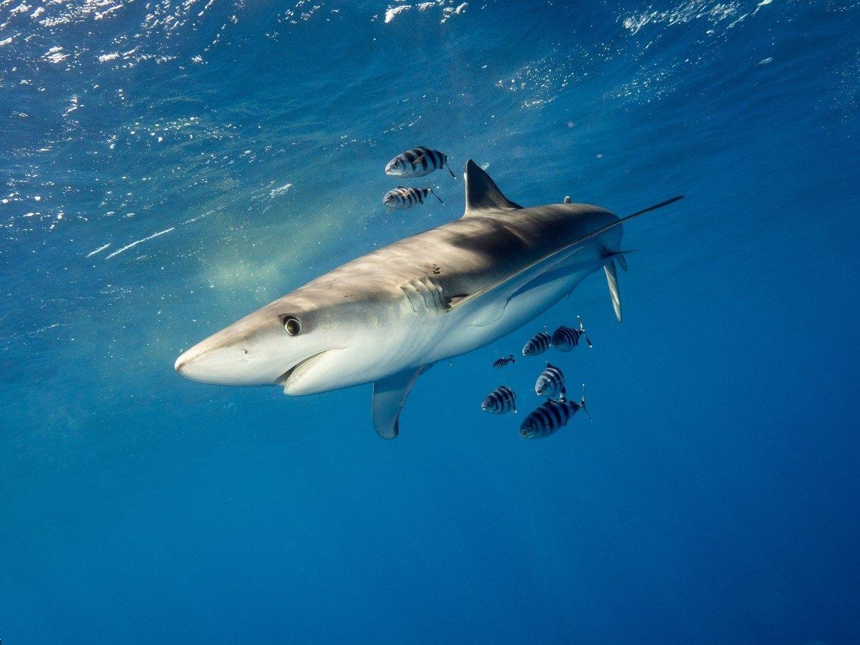 Seznamka žraločí nádrž