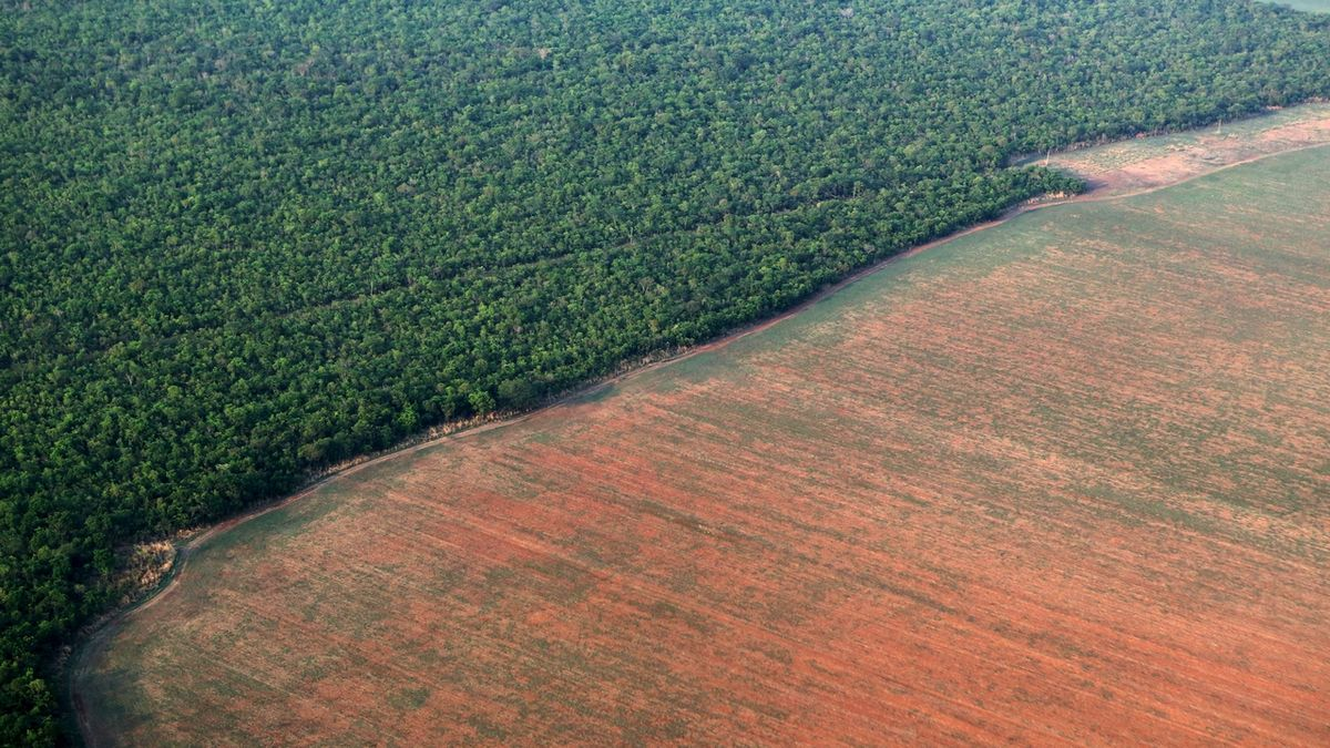Brazílie vyšetřuje prodej chráněné půdy z Amazonie na Facebooku