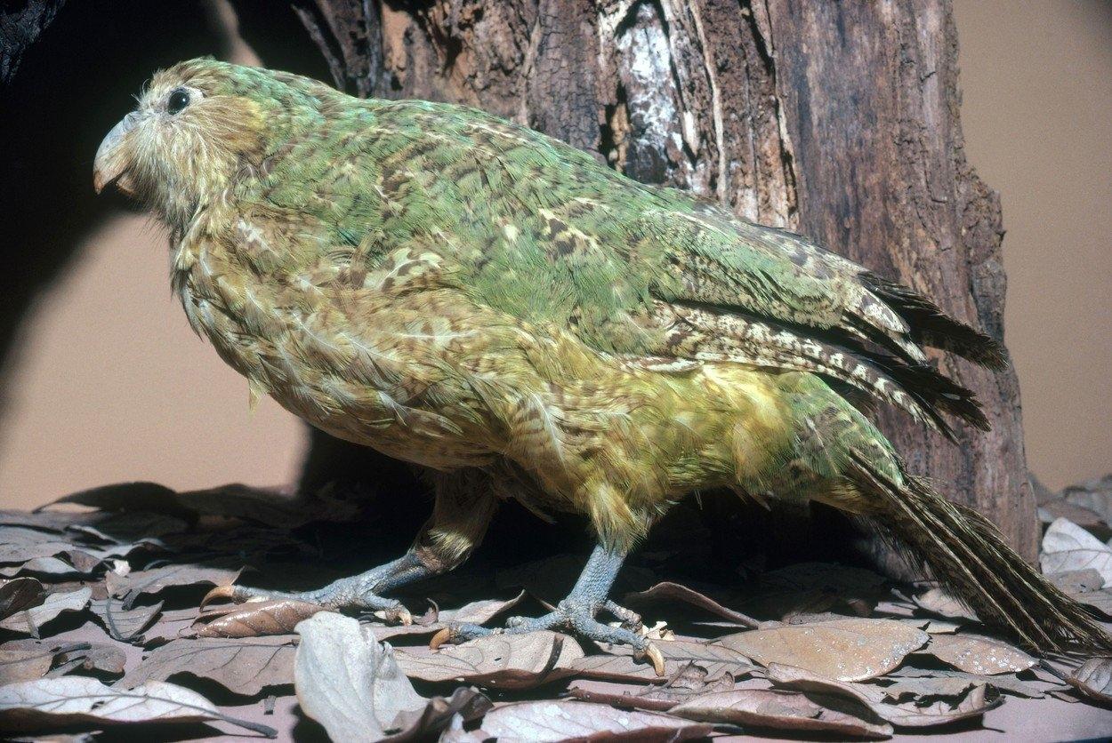 porovnání velkých ptáků