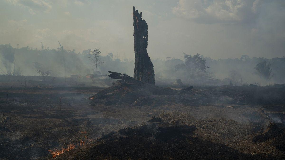 Brazílie: Neraďte, zalesněte si Evropu!